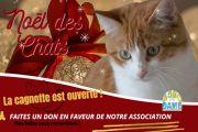 Un don pour les chats